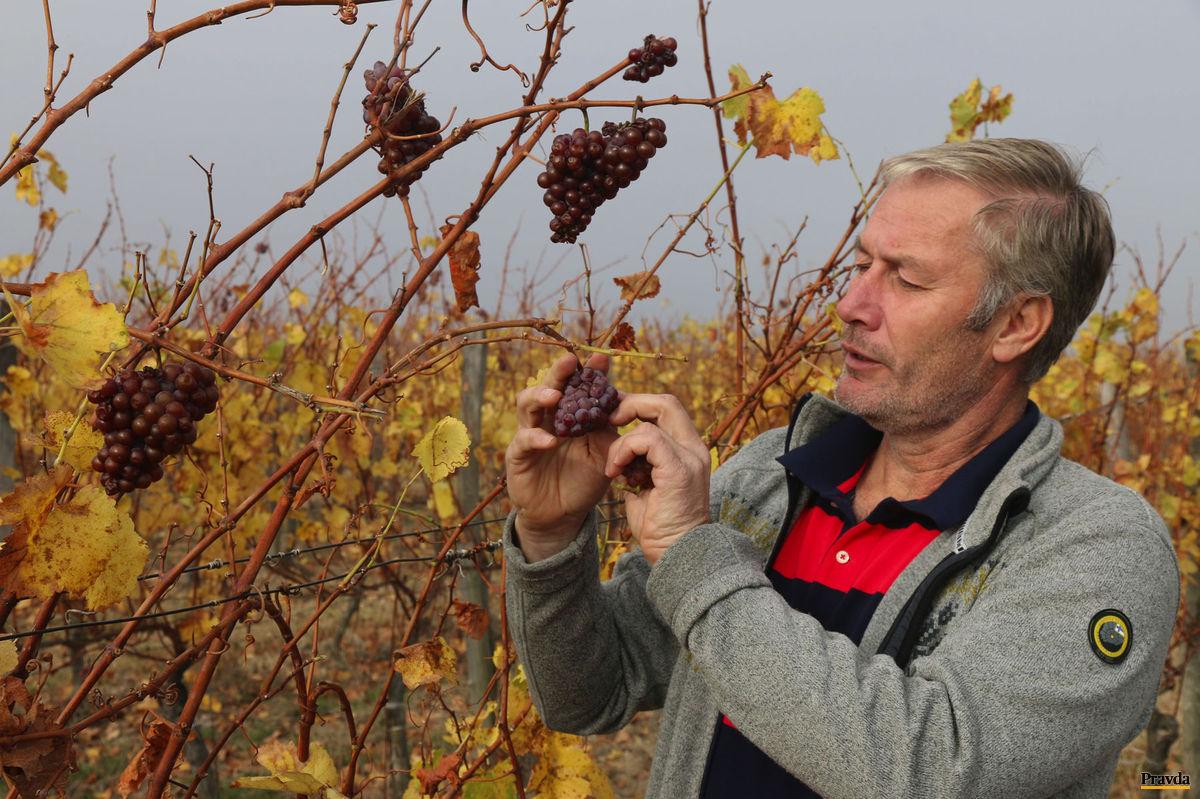 Vinohradník a vinár Pavol Michálek.