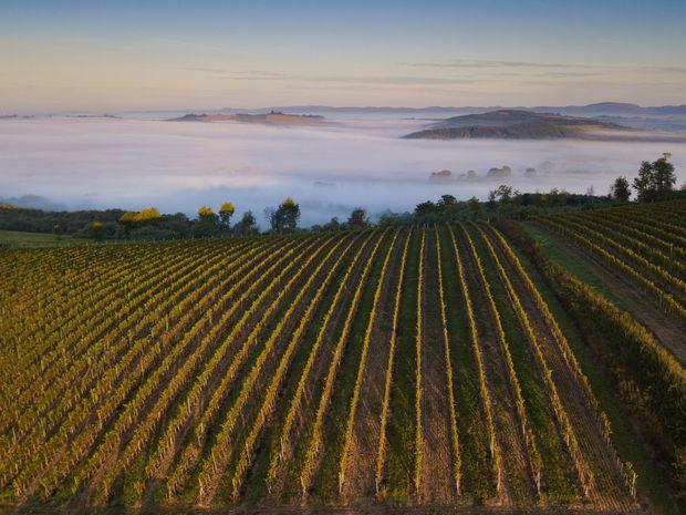 Chateau Selešťany: Hamšíkovo dvorné vinárstvo. Starý vrch opäť rodí víno