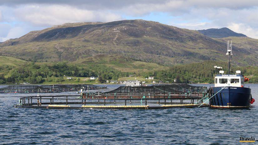 západné pobrežie Škótska, lososy