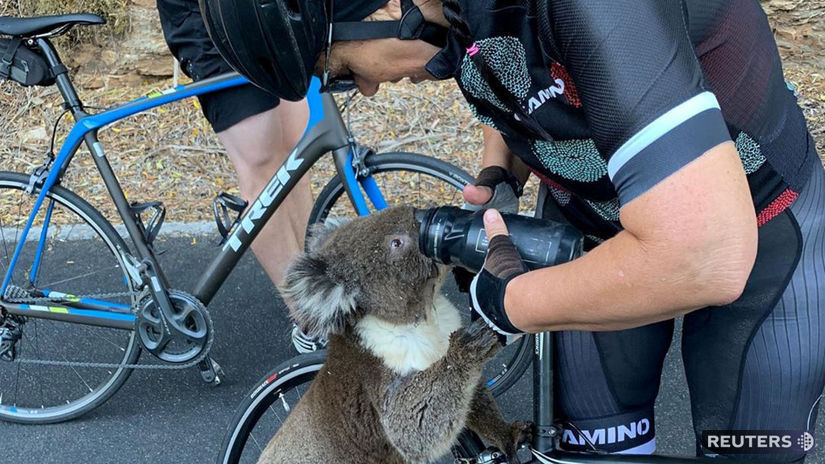 austrália koala požiar cyklista