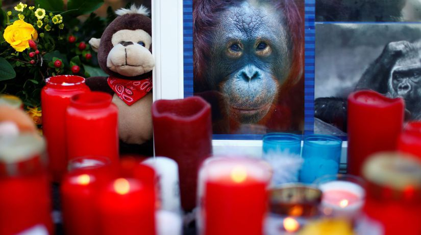 Zoo v Krefelde po požiari v pavilóne opíc.