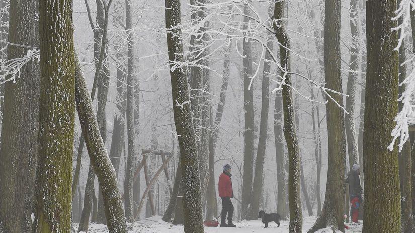 Košice Počasie Stromy Námraza