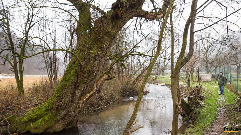 rieka, stromy, korene