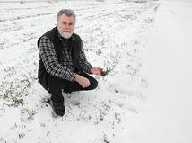 muž, zima, sneh, pôda, pozemok, tráva