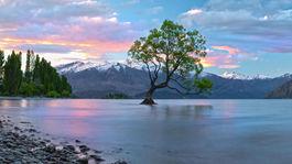 Wanaka tree  New Zealand 0M4A2527 Panorama