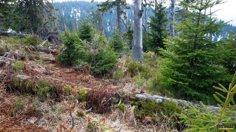 Jánošíkova kolkáreň, les, príroda, sucho