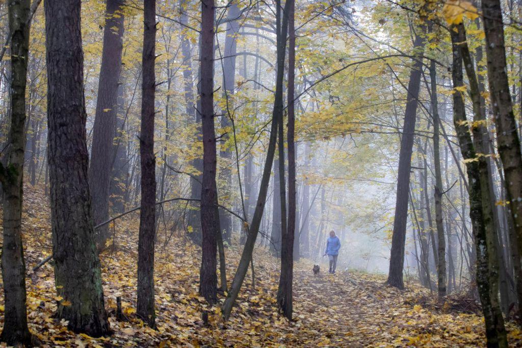 Litva, stromy, les, pes, prechádzka, príroda, šport,
