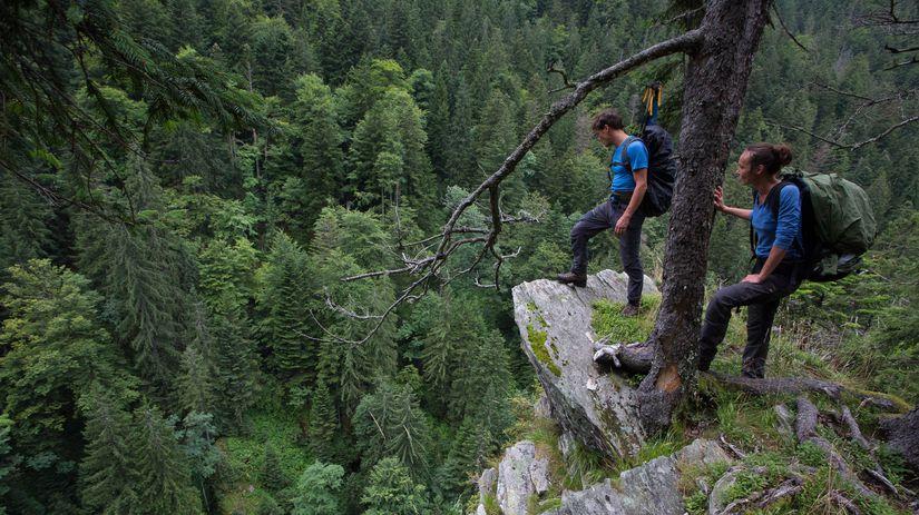 Rumunsko, prales, prirodzený les, príroda,...