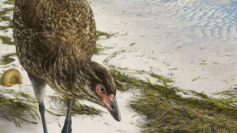 Wonderchicken Bird Fossil