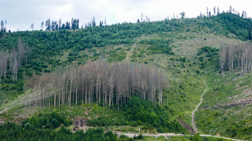 les, vyrub stromov, strom, ekologia, rubanisko,...