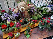 plyšový medveď, balkón