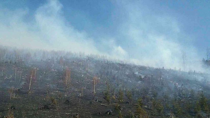 les, požiar, rúbanisko, oščadnica