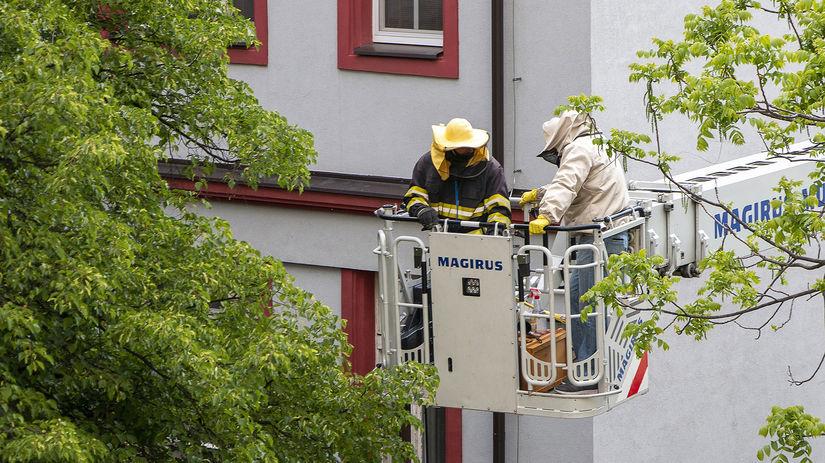 hasiči, vysokozdvižná plošina, včelár, rojenie...