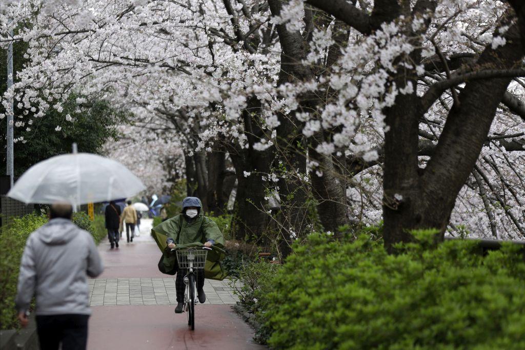Japonsko, kvety čerešne