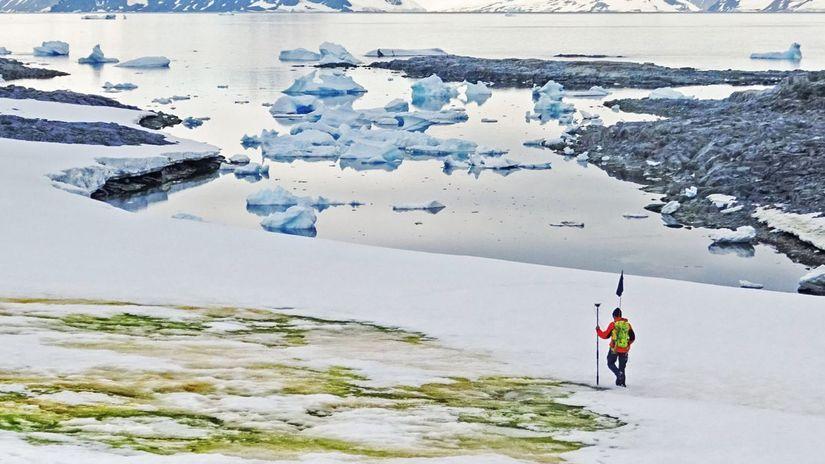 8-snow algae anchorage antarctica 2018 davey...