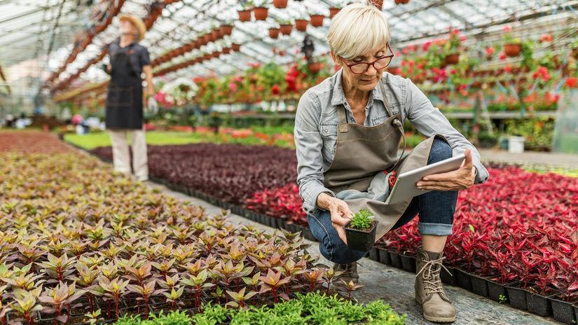 skleník, rastliny, dôchodkyňa, kontrola