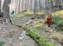les, prales, Jalovecká dolina