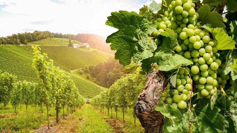 Rakúsko, vinohrad, vinice, hrozno
