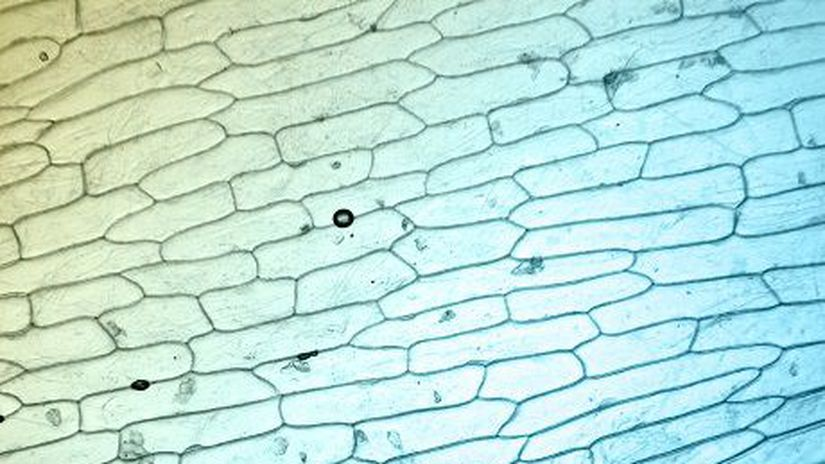 Bunky-pod-mikroskopem