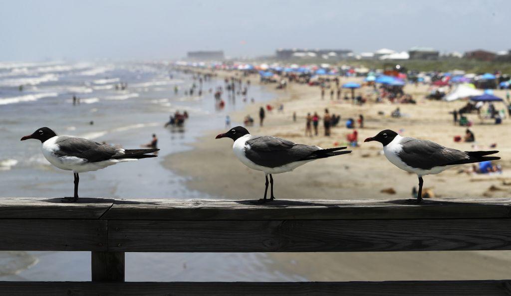 Texas, čajky, pláž, more, dovolenka,