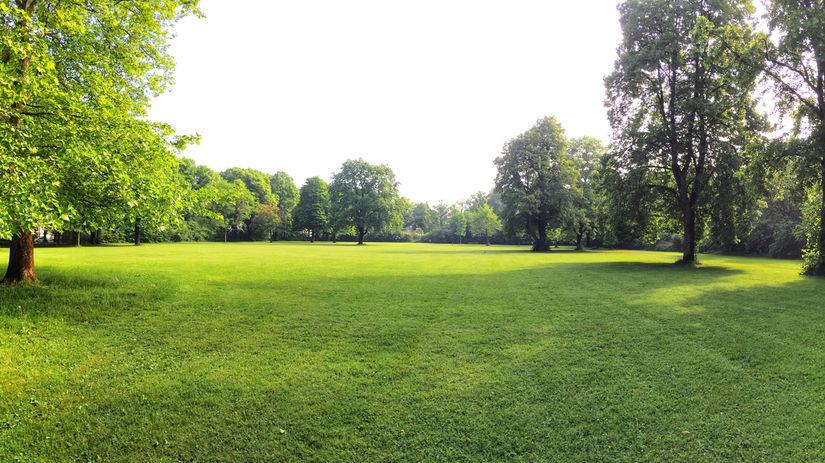 lúka, trávnik, stromy, park, pozemok, tráva