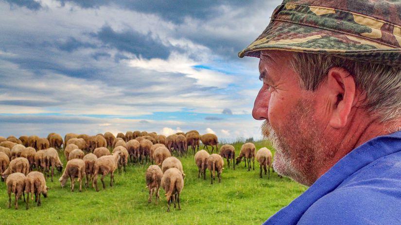 bača, Jožo Červeň, stádo, ovčiarstvo, ovce