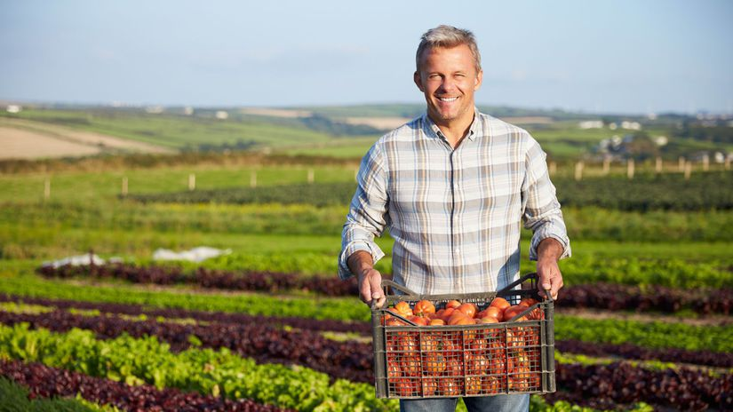 pole, úroda, farmár, úsmev, ovocie, zelenina,...