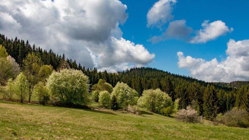 les, lúka, jar, Kysuce, Korňa, príroda, Slovensko