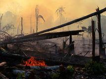 Bolsonaro / Amazonský prales /