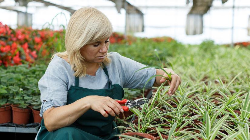 strihanie, záhradkárstvo, podnikanie