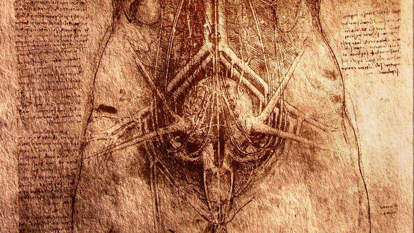 vnútornosti, orgány, telo, nákres, Leonardo da...
