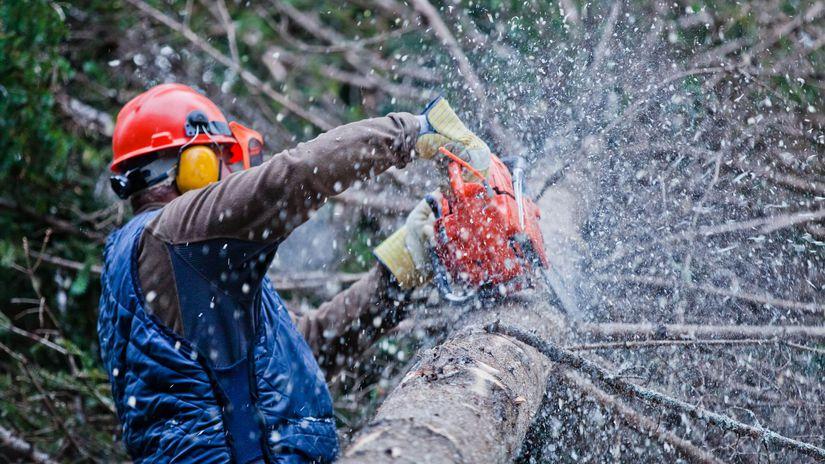 ťažba dreva, píla, pílenie, strom