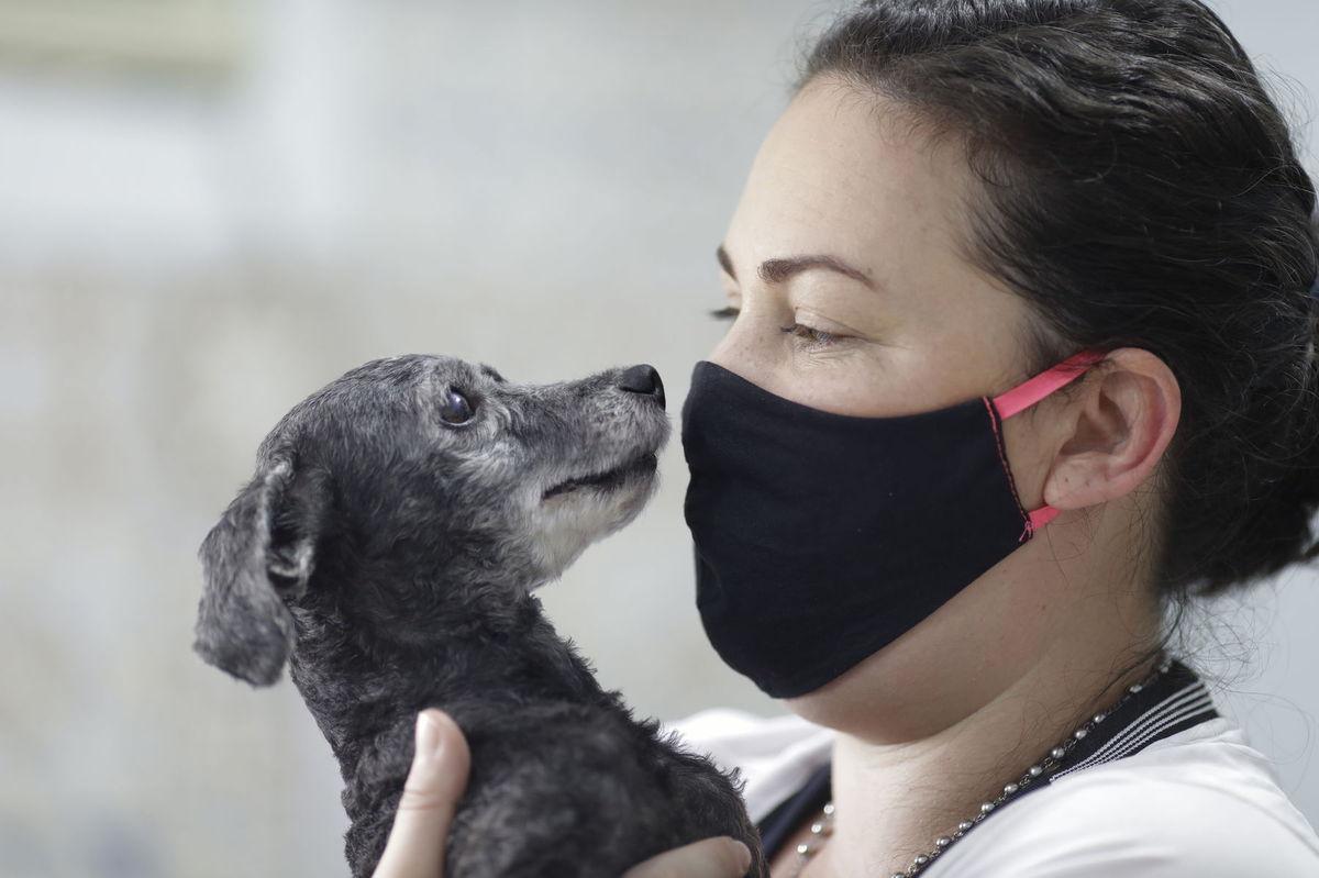 Virus Outbreak Brazil - Animal Adoptions
