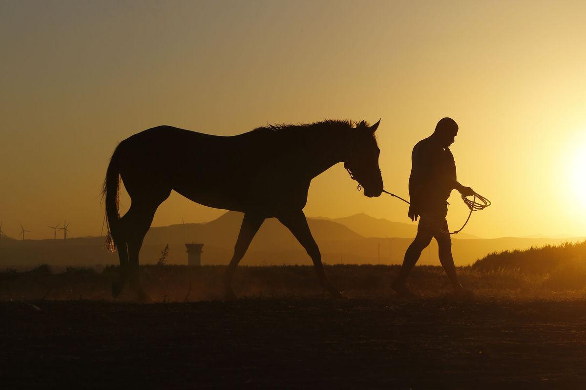 kôň, Cyprus, farma