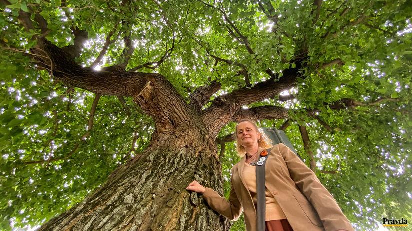 moruša, strom, Dana Ševčíková
