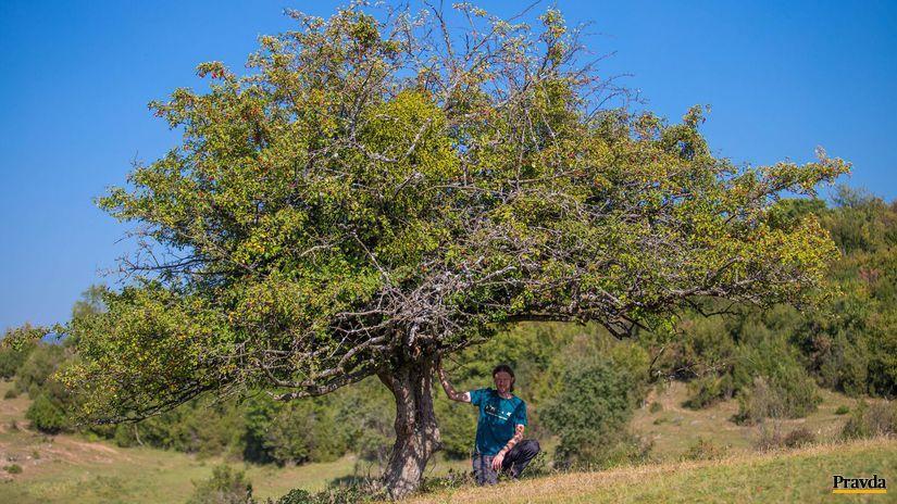 Pavol Littera, hloh, strom