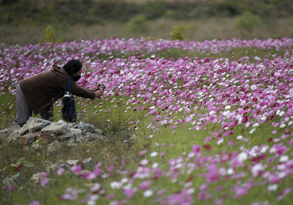 Južná Kórea, koronavírus, kvety