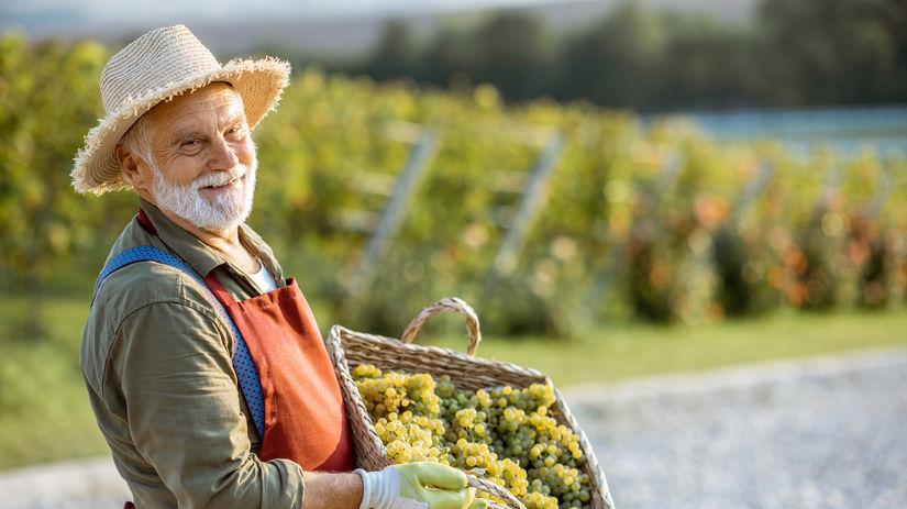 vinár, hrozno, práca, penzista, pracujúci penzisti