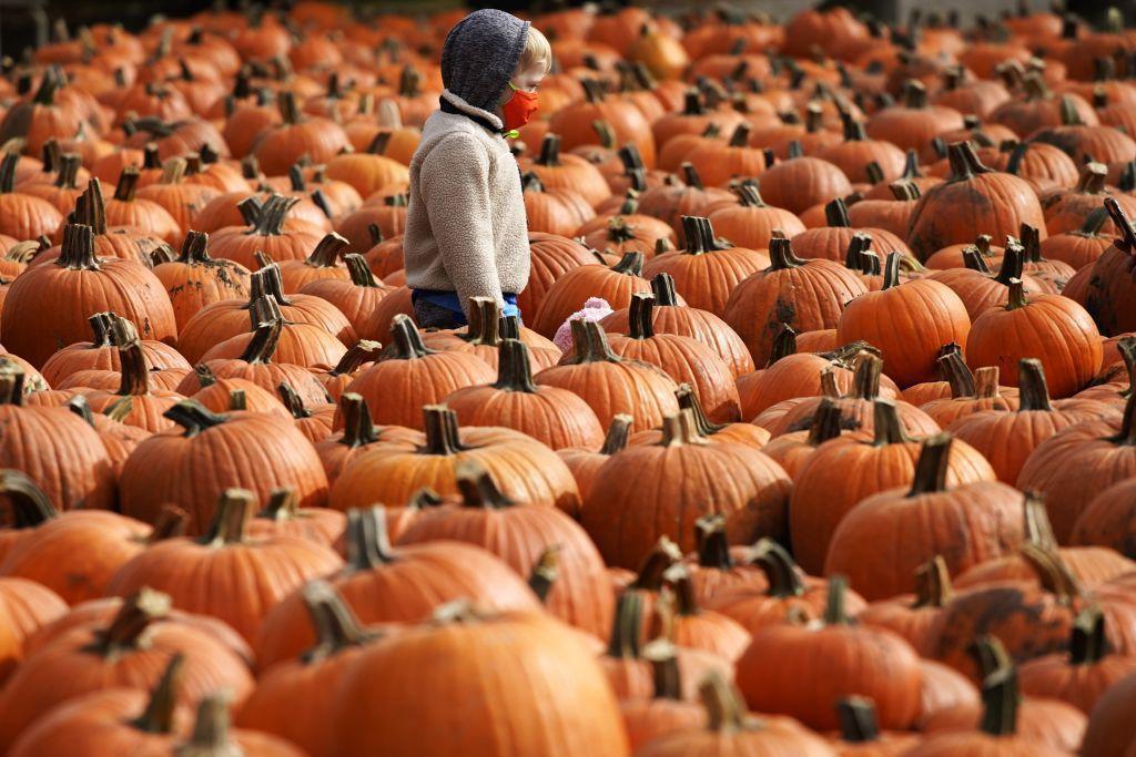 Illinois, rúško, tekvice, Halloween