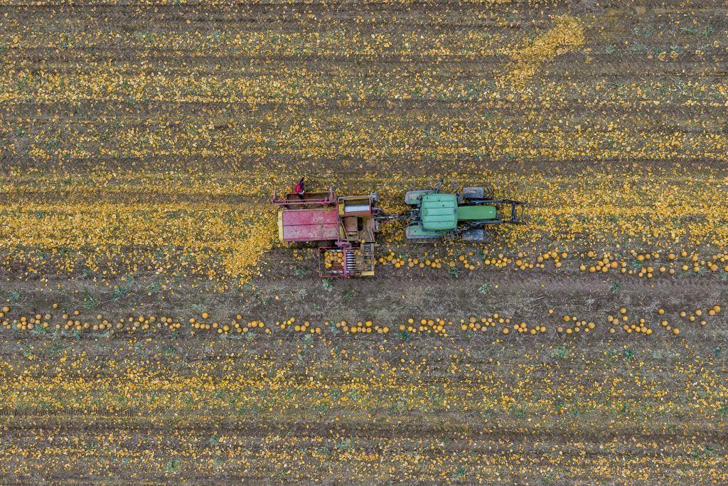 pole, traktor, úroda, poľnohospodárstvo, tekvice,