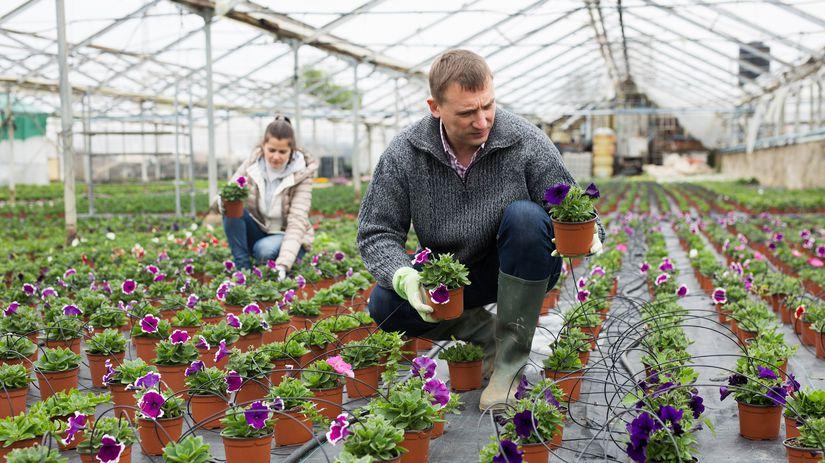 kvetinárstvo, podnikanie, živnostník, skleník