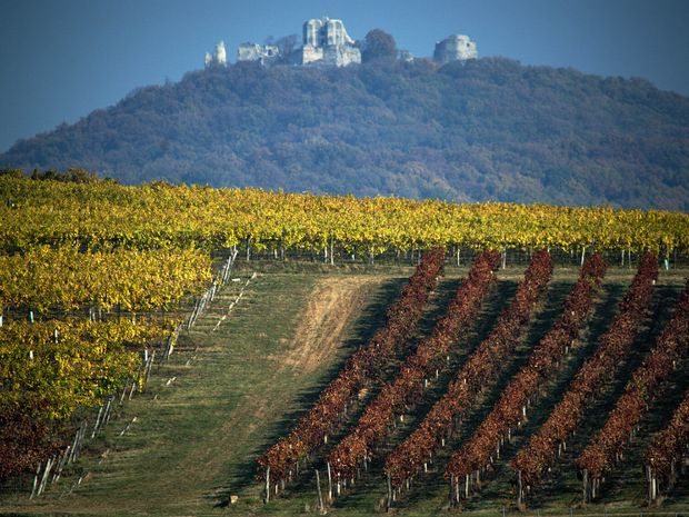 Zostaneme krajinou dobrého vína?