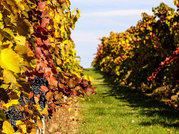 Víno: Vždy iné, nie na kvapôčku rovnaké