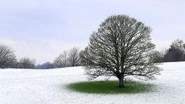 Anglicko, počasie, zima, sneh, príroda