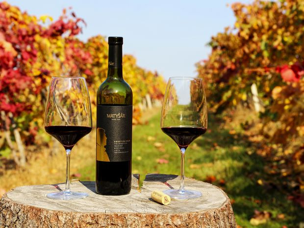 Ktoré vína udávajú tón tento rok? 100 najlepších slovenských vín