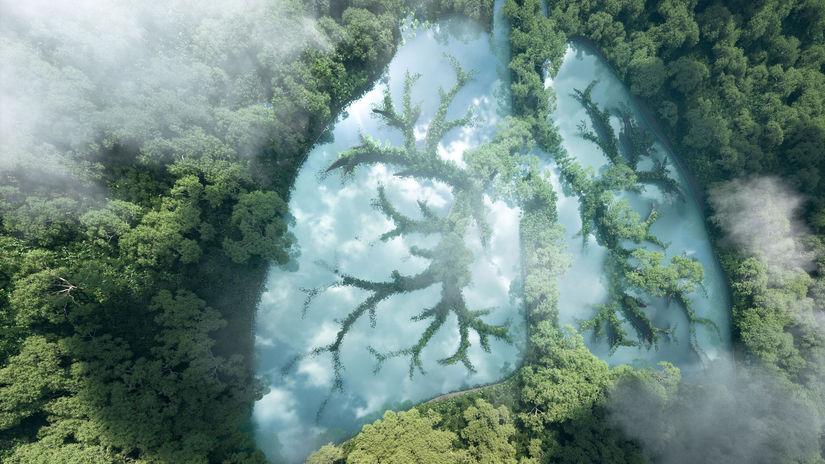 les, pľúca, hmla, oblaky