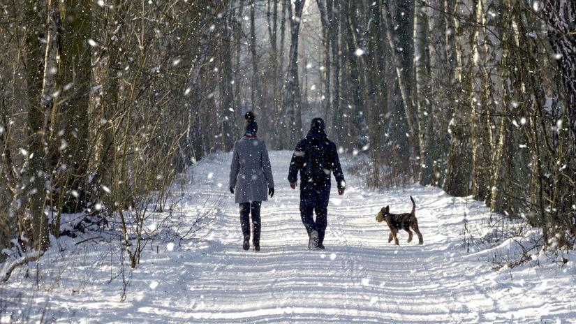 zima, prechádzka, pes, venčenie, les, sneh