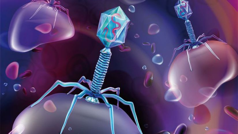 The beneficial bacteriophage virus in the human...