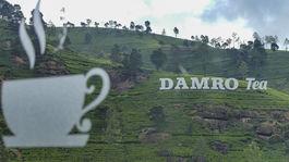 Srí Lanka, cejlónsky čaj, čaj, čajové polia, exotika