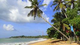 Srí Lanka, pláž, palmy, more, Tangalle